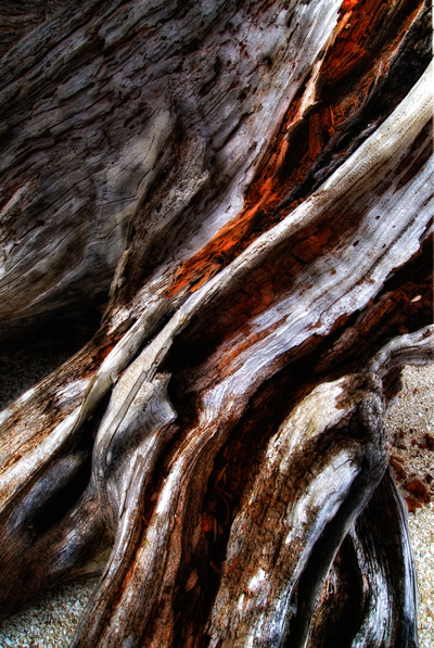 Driftwood_mid_dark_light_2